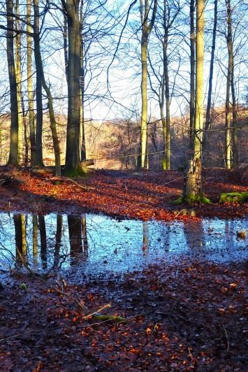 Rude Skov, på vej mod Løje Sø